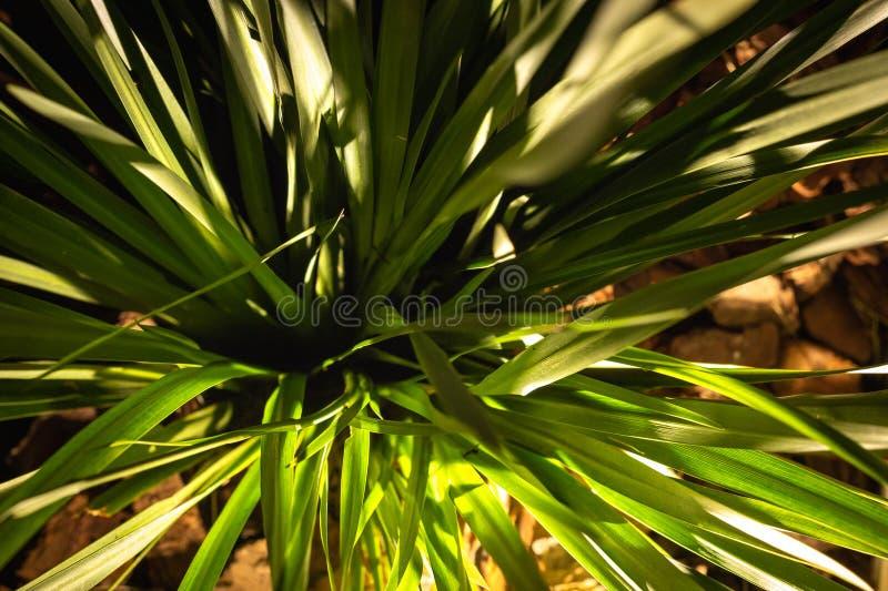 Una pianta strutturale, verde e pulita rimane il giardino fotografie stock libere da diritti