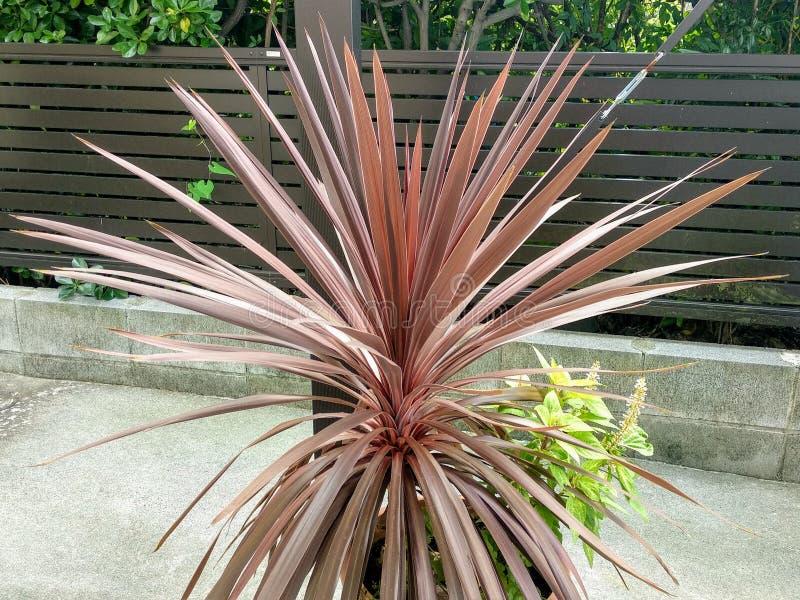 Una pianta unica graziosa fotografia stock