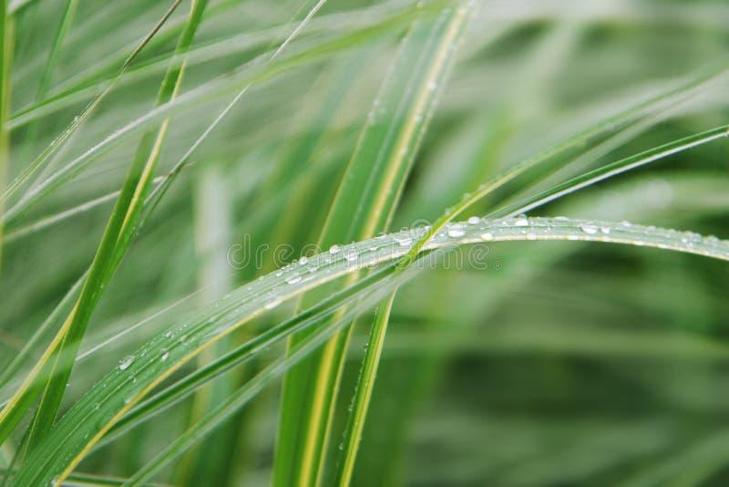 Una pianta verde con goccia di acqua fotografie stock libere da diritti