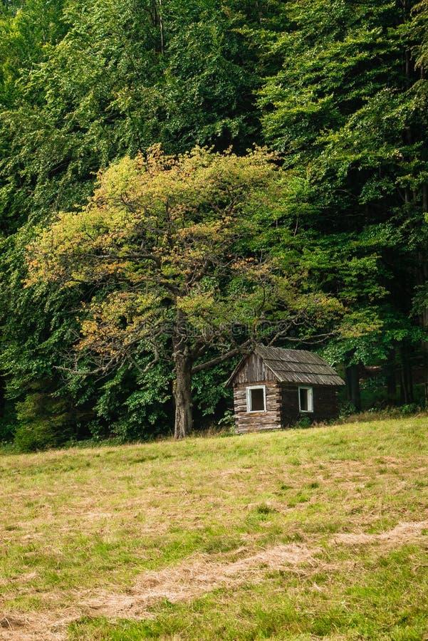 Una piccola casa di legno sotto un albero fotografia stock