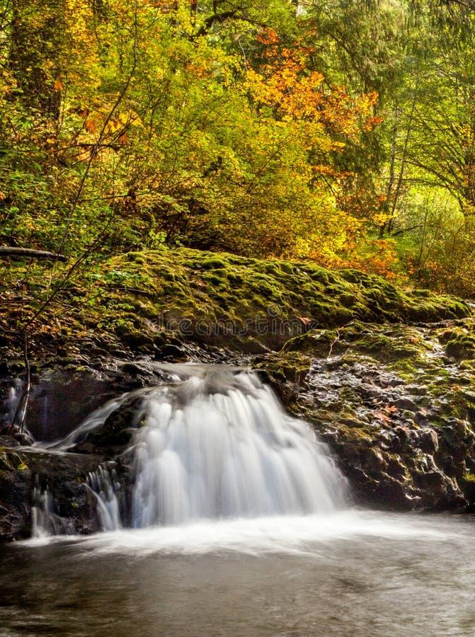 Una piccola cascata nel parco di stato d'argento di cadute in autunno, Oregon, Stati Uniti immagine stock libera da diritti