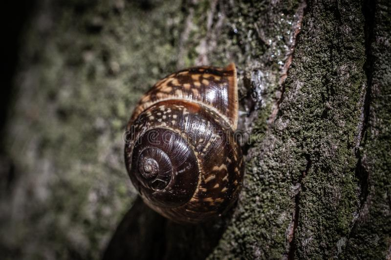 Una piccola lumaca si è appollaiata su un tronco di albero alto, macro foto fotografia stock libera da diritti