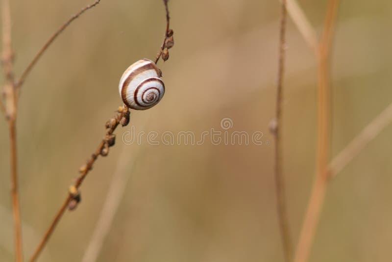 Una piccola lumaca su un gambo fotografia stock