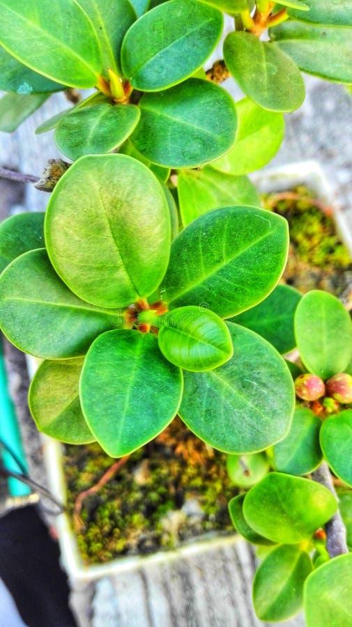 Una piccola pianta… più grande fotografia stock