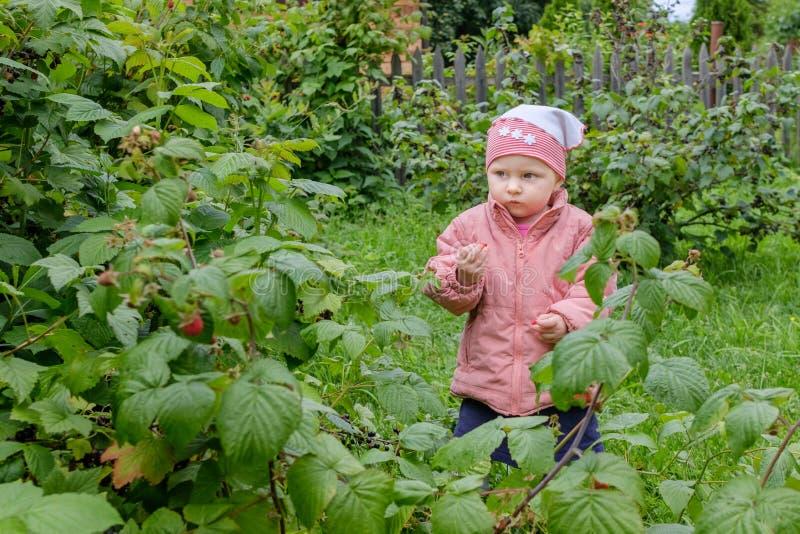 Una piccola ragazza bionda nel giardino gode delle bacche fragranti del lampone rosso, selezionante li diritto dal cespuglio fotografia stock
