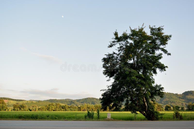 Una pietra di chilometro sulla strada fotografie stock