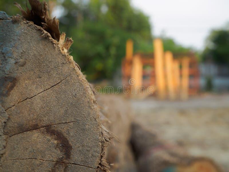Una pila de árboles cortados de la teca en el bosque para un fondo imagen de archivo