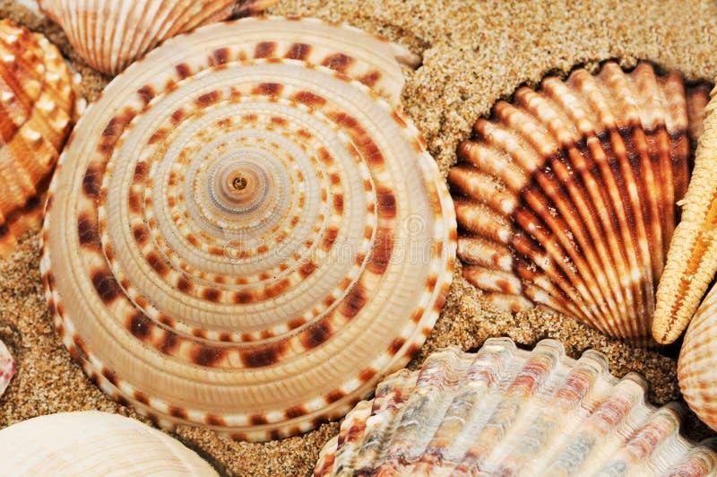 Una pila de seashells fotos de archivo
