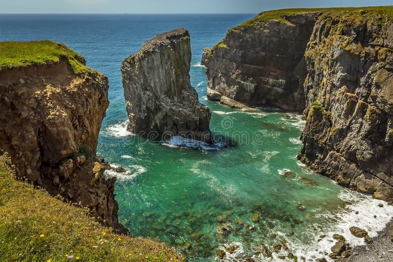 Una pila della roccia al largo popolata da Raverbill crescente Gulls sulla costa di Pembrokeshire, Galles fotografia stock libera da diritti