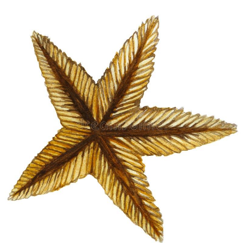 Una pintura de la acuarela de la estrella de mar arena-coloreada se fosilizó la clase de invertebrados tales como equinodermos ilustración del vector