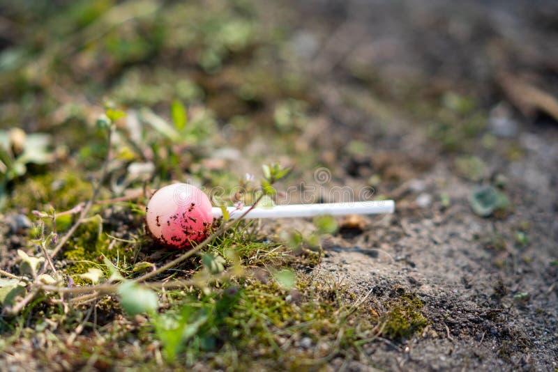 Una piruleta en la tierra bajo ataque por las hormigas foto de archivo