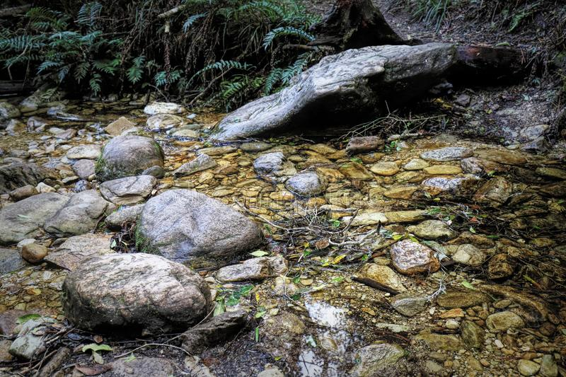 Una pista de senderismo en la cala del jubileo, un punto de la comida campestre en el bosque de Knysna cerca de Knysna, Suráfrica imagen de archivo