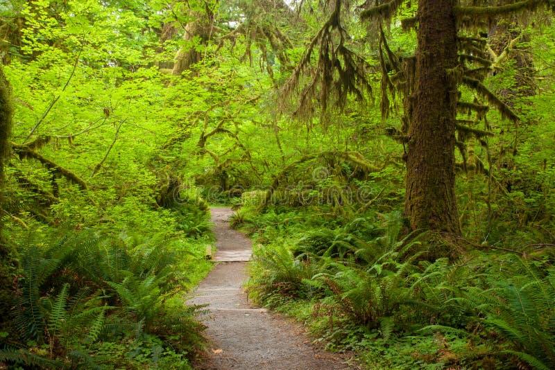 Una pista de senderismo en la selva tropical de Hoh en el estado de Washington foto de archivo libre de regalías