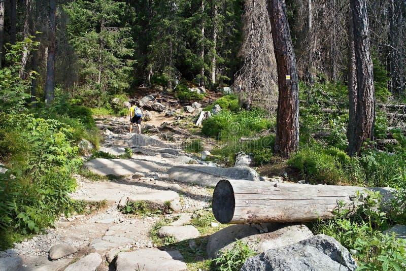 Una pista de senderismo por completo de obstáculos como usted sube la cascada de Skok fotos de archivo libres de regalías