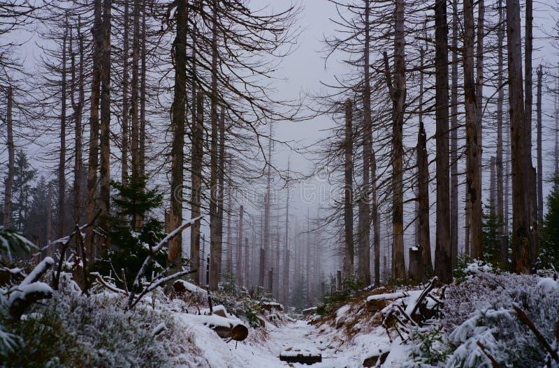 Una pista de senderismo romántica en el bosque del invierno imagenes de archivo