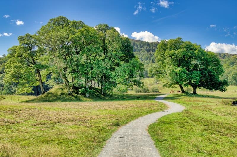 Una pista del país que lleva a un soporte de árboles en coutryside inglés fotografía de archivo libre de regalías