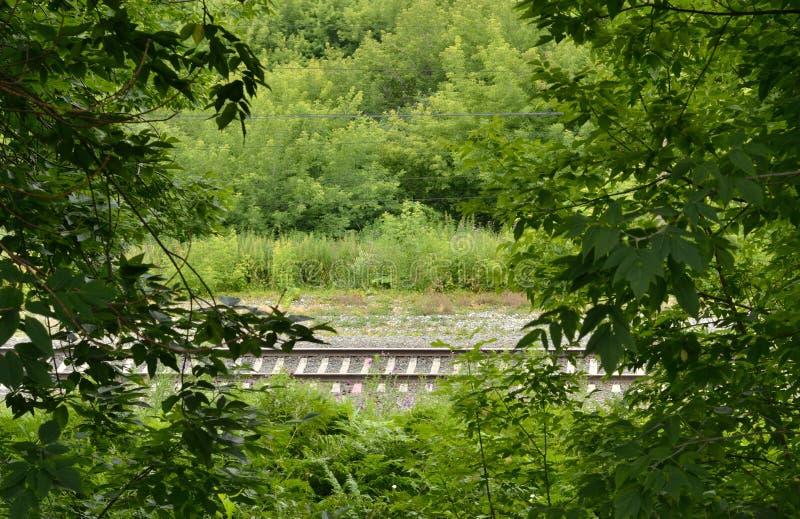 Una pista ferroviaria que pasa a través de un matorral del arbusto fotografía de archivo