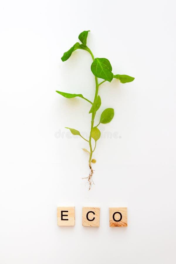 Una plántula con una raíz se aísla en un fondo blanco y las palabras son de eco de madera de las letras, vida natural, nueva Ende imagenes de archivo