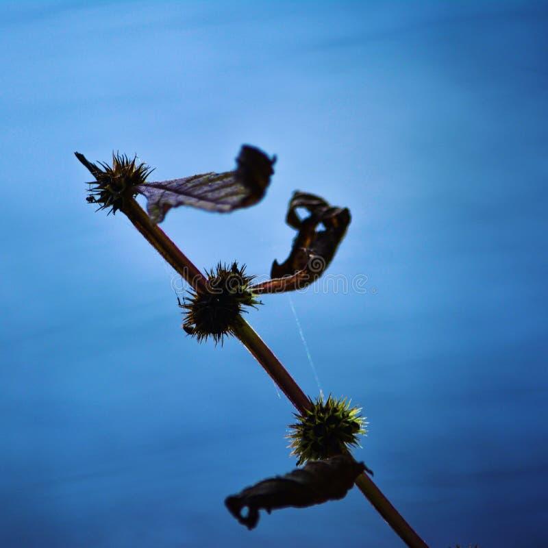 Una planta apenas sobre el lago dartford imagen de archivo