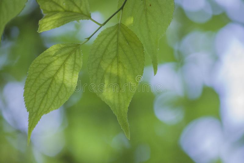 Una planta con las hojas verdes blandas imagen de archivo