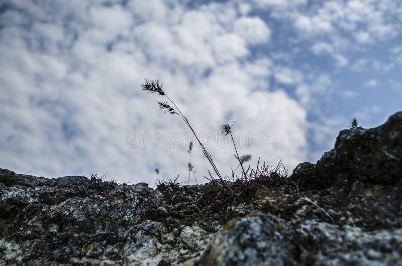 Una planta que crece fuera de piedra fotos de archivo