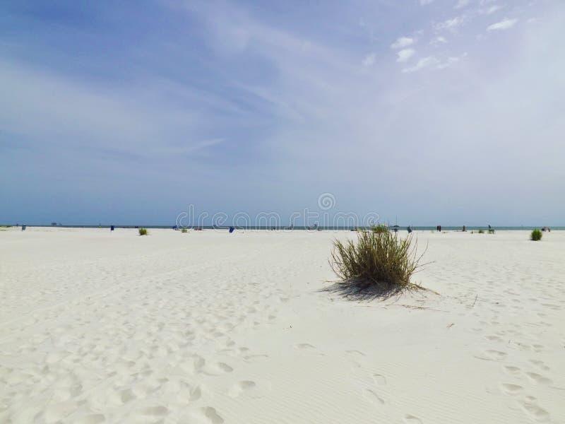 Una planta solitaria en la arena imágenes de archivo libres de regalías