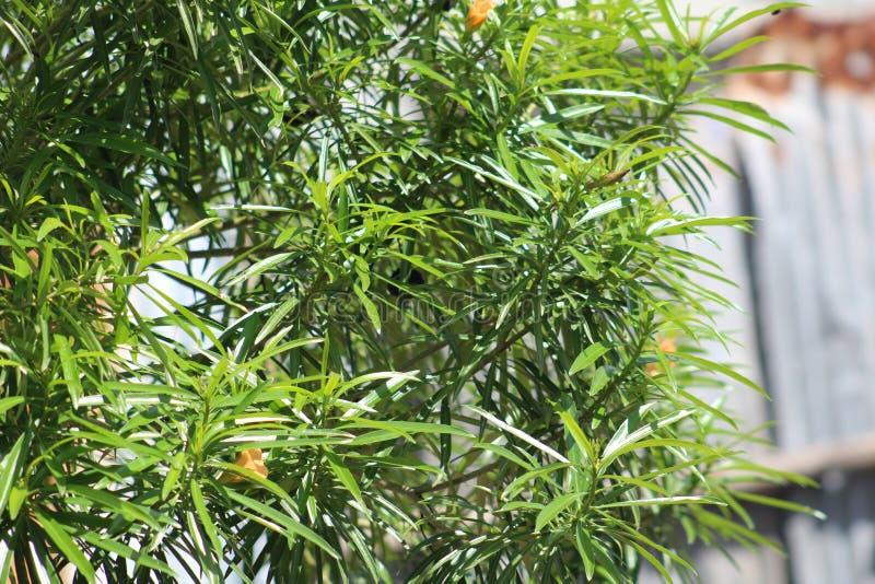 Una planta verde durante una estaci?n de verano imagen de archivo libre de regalías