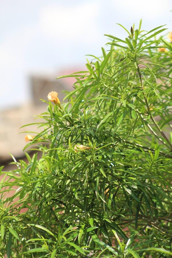Una planta verde durante una estaci?n de verano imagenes de archivo