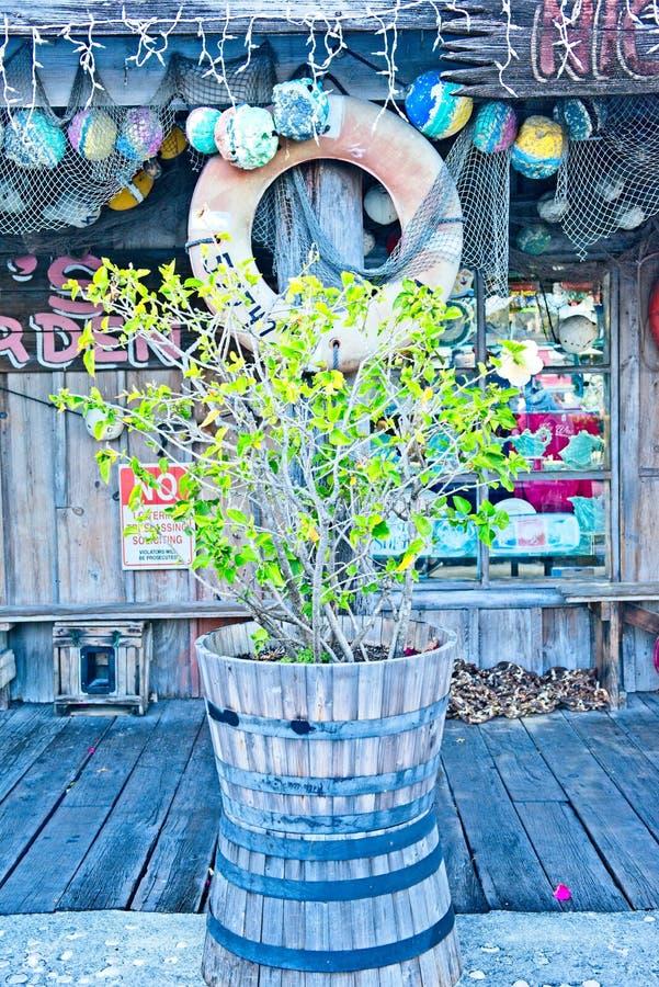 Una planta verde se sienta en un barril rústico del roble fuera de un establecimiento temático de la pesca en Key West, la Florid imágenes de archivo libres de regalías