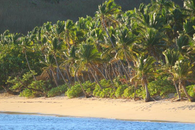 Una playa de la arena en una isla tropical, Fiji foto de archivo