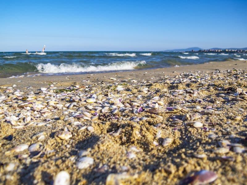 Una playa del Mar Negro cubierta con las conchas marinas, gente que juega water polo en la distancia, en Primorsko, Bulgaria imagen de archivo
