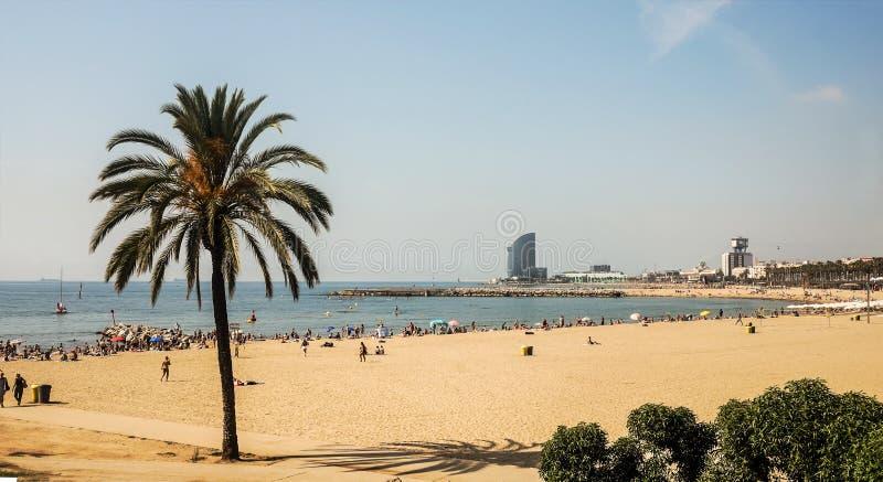 Una playa grande de la arena con una palma verde y mucha gente cogen algunos rayos en la costa imagen de archivo libre de regalías