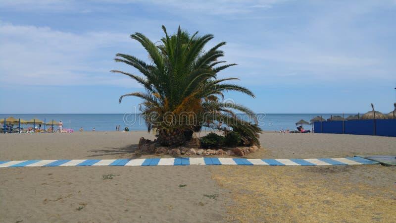 Una playa hermosa con la palmera imagen de archivo libre de regalías