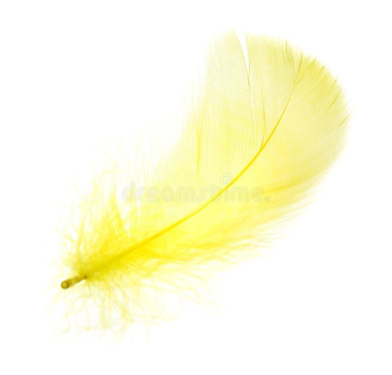 Una pluma amarilla hermosa en un fondo blanco imágenes de archivo libres de regalías