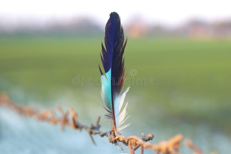 Una pluma colorida y hermosa foto de archivo