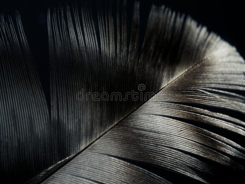 Una pluma del vuelo fotos de archivo