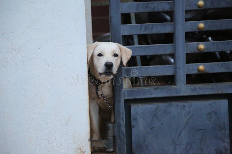 Una puerta siguiente del perro fotografía de archivo