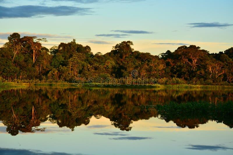 Una puesta del sol asombrosa en el parque de Yasuni, Ecuador foto de archivo libre de regalías