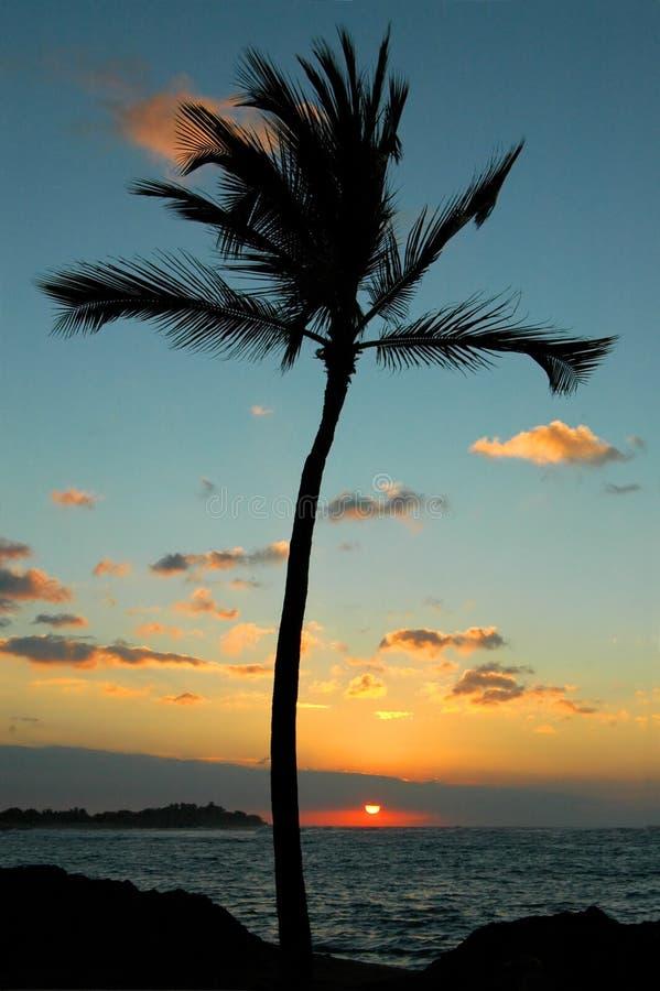 Una puesta del sol de la palma imagen de archivo libre de regalías