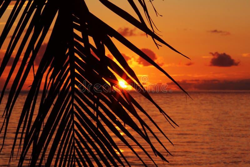 Una puesta del sol detrás de las palmeras en el mar imagen de archivo libre de regalías
