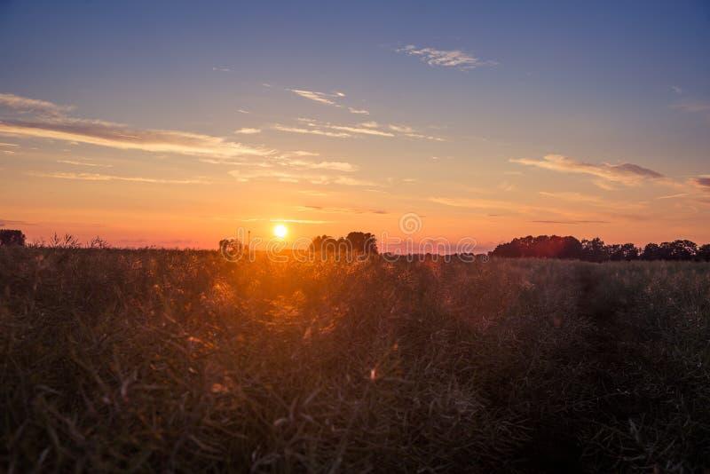 Una puesta del sol hermosa, de oro sobre el campo de la rabina en Letonia, Europa del Norte foto de archivo libre de regalías
