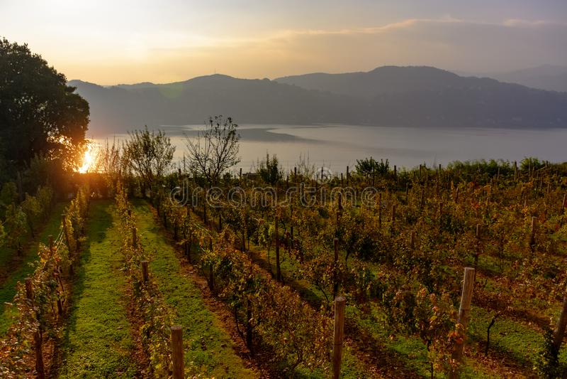 Una puesta del sol hermosa sobre el viñedo que pasa por alto el lago fotos de archivo libres de regalías
