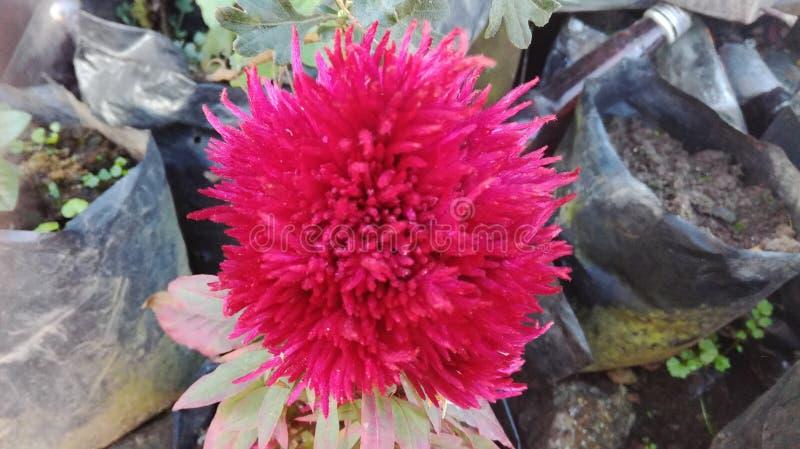 una qué floración fantástica foto de archivo libre de regalías