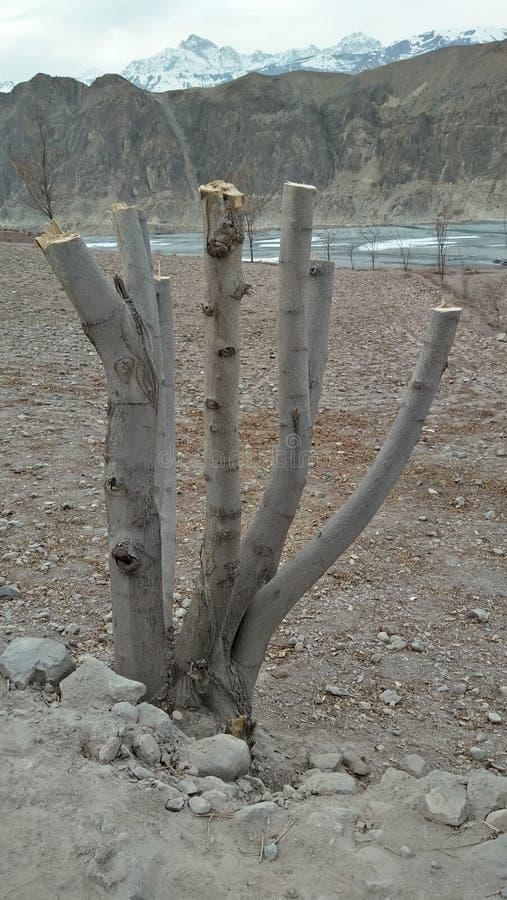 Una raíz y seis troncos imagenes de archivo