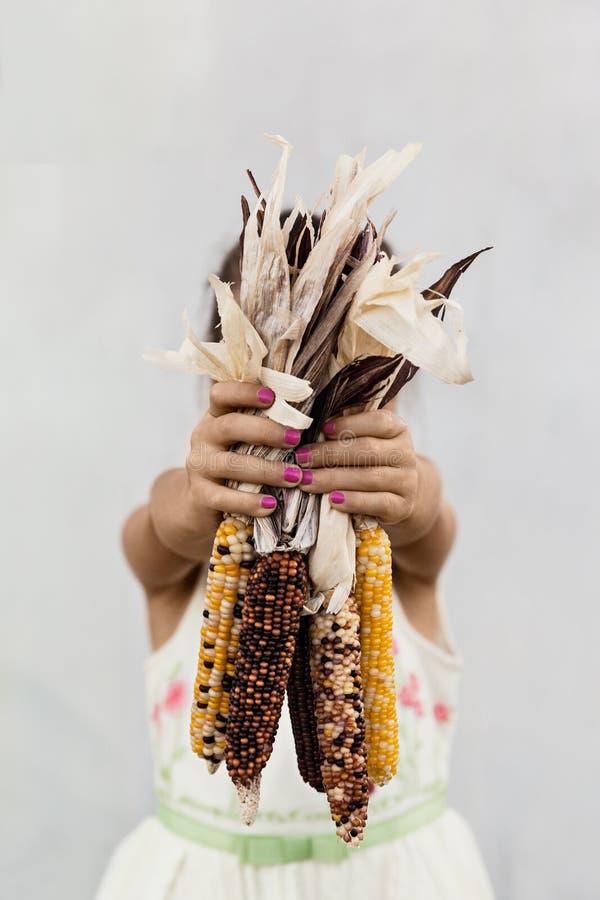 Una ragazza che riunisce granturco, Autumn Holiday Concept fotografie stock