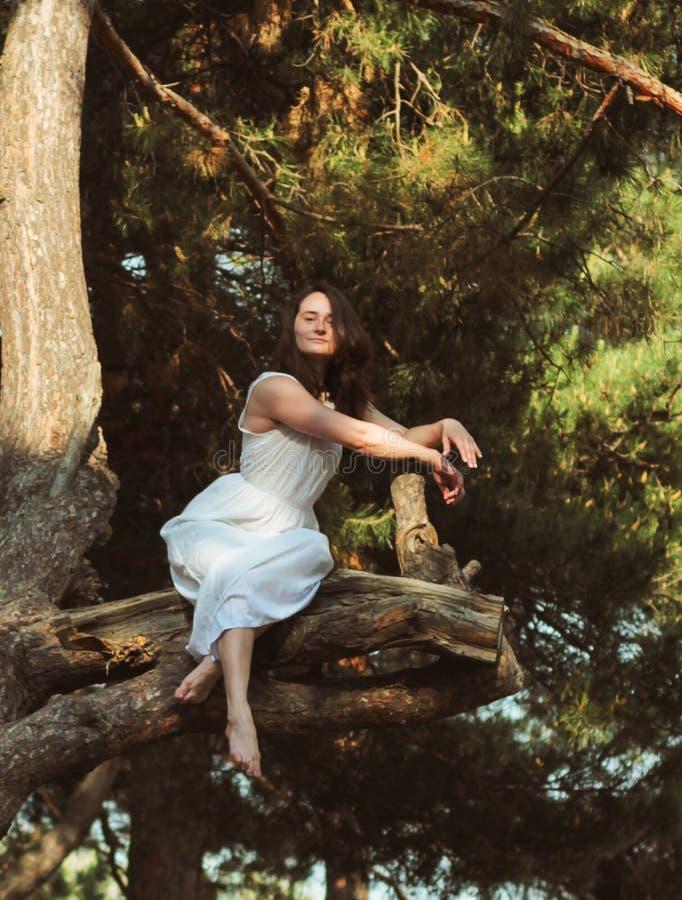 Una ragazza che si siede sul ramo nella foresta, vestito bianco del pino fotografia stock