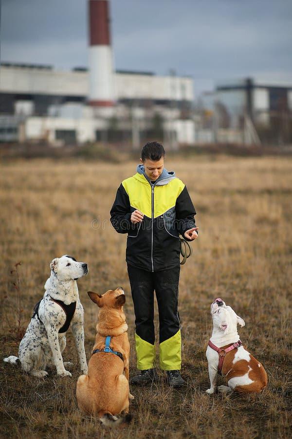 Una ragazza e tre cani che si siedono sul campo di autunno fotografie stock libere da diritti