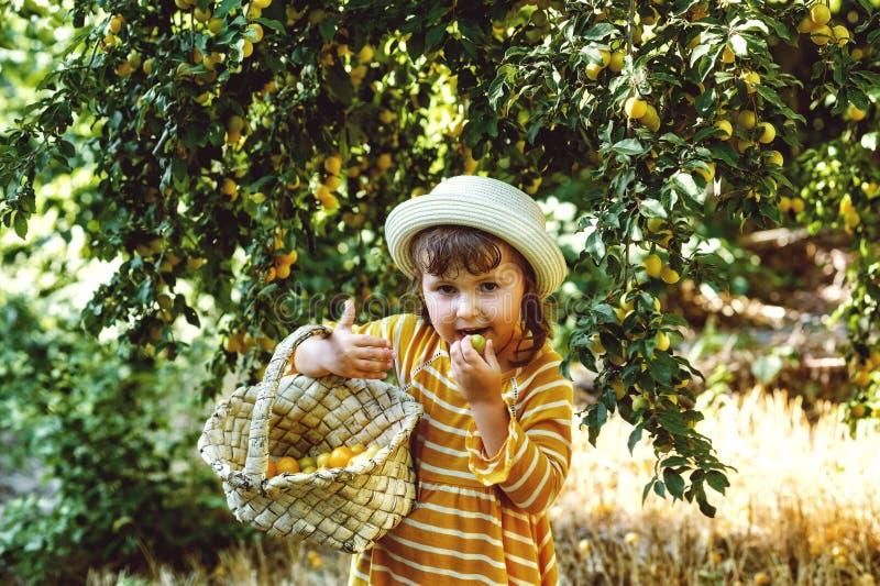 Una ragazza graziosa con un canestro in sue mani sta raccogliendo le bacche immagini stock libere da diritti