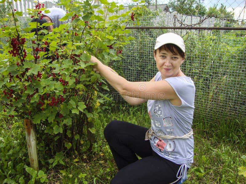 Una ragazza riunisce le bacche nel giardino immagini stock