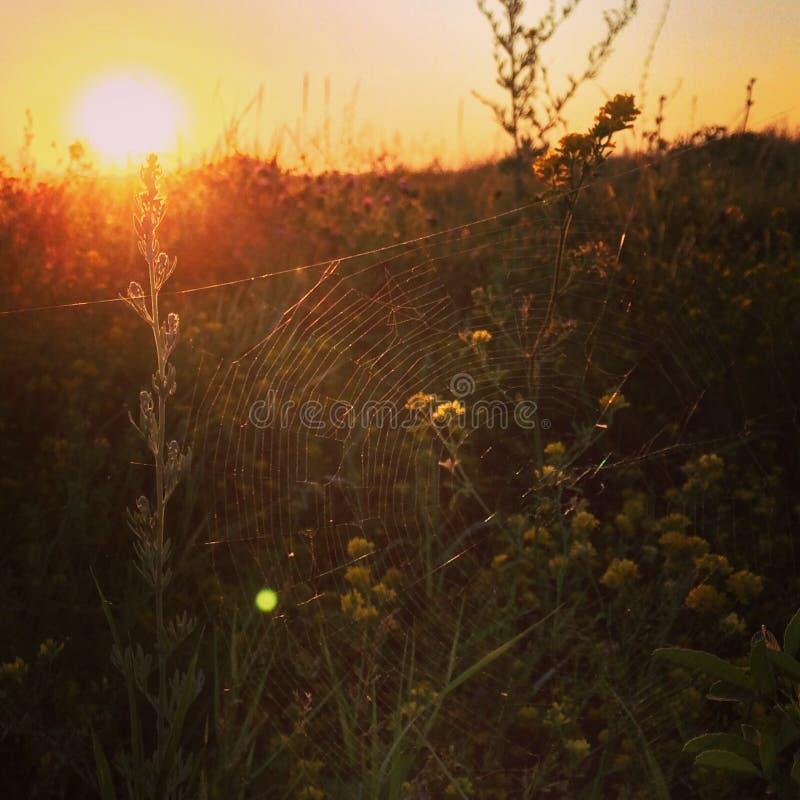 Una ragnatela sul tramonto immagini stock